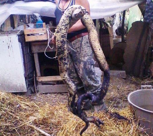 Photo of Ucciso nelle campagne di Roccanova un serpente di oltre 3 metri (FOTO)