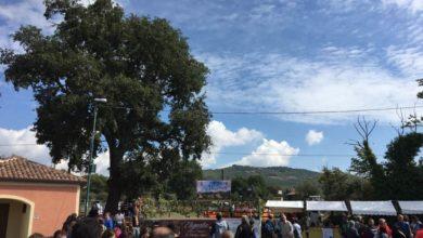 Photo of In corso a Viggiano la 44esima edizione della festa delle Vigne