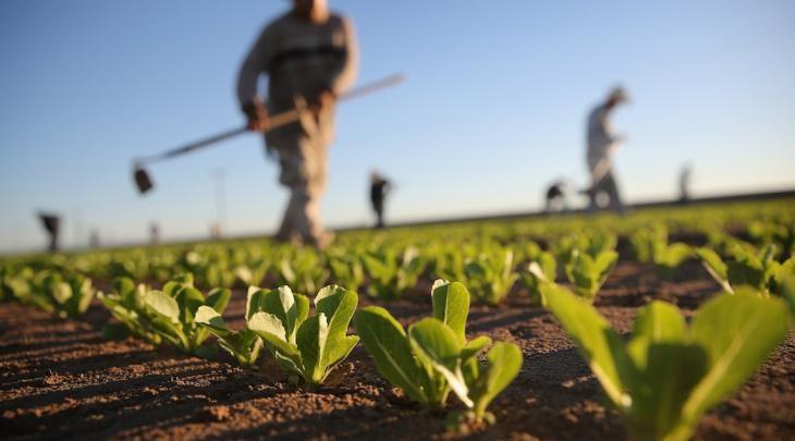 """Photo of Coronavirus, Coldiretti: """"piano Marshall anche per l'agricoltura lucana"""""""