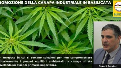 Photo of Promozione della canapa: che progetti ha la giunta Bardi?
