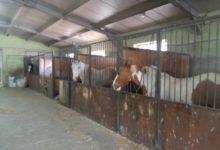 Photo of OIPA Potenza c'è! Per il momento i 30 cavalli sono salvi!