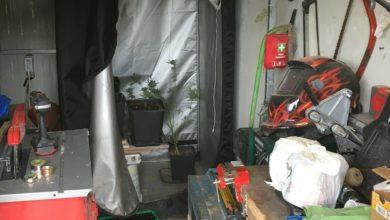 Photo of Giovane sorpreso in casa con oltre 200 grammi di marijuana e una serra indoor. Arrestato