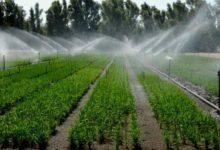 Photo of La crisi idrica (per irrigazione) di ferragosto al Sud ha toccato i livelli di guardia